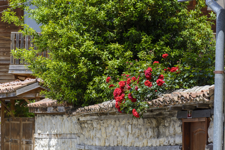 Bush of red rose on a wall in a old antic street