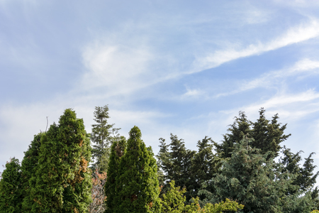 Background with trees top against colorful blue sky