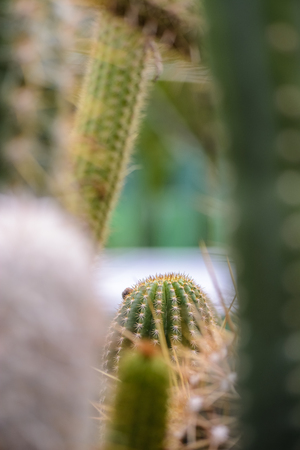 background with cactus theme , and place for your text Stock Photo