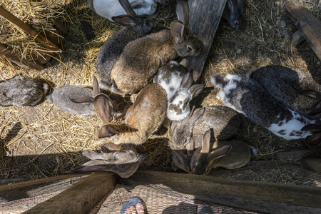 Group of rabbit from a aerial view