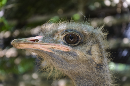 close up of a Ostrich head in a zoo Stock Photo