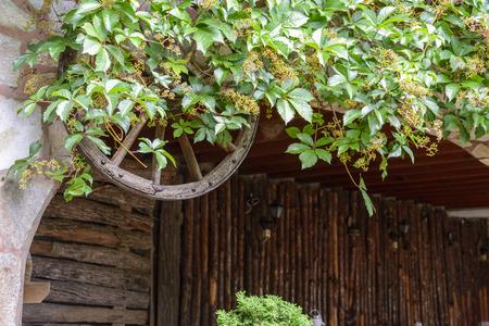 retro background with a wooden wheel ans wild vine Stock Photo