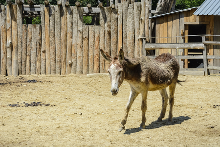 donkey surrounded by fences in a zoo