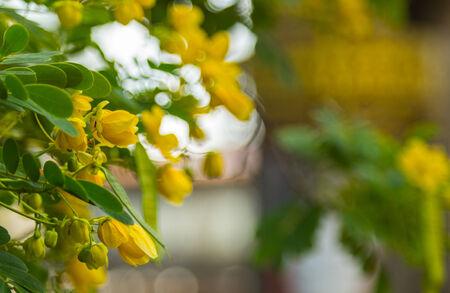 shady: beautiful flowers Stock Photo