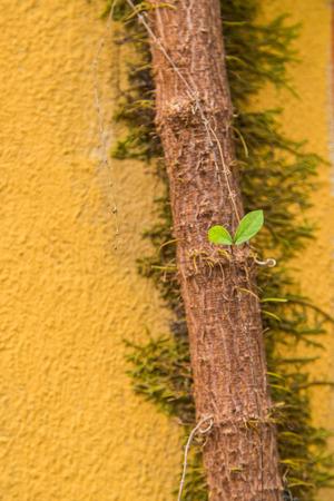 Tree on the wall photo