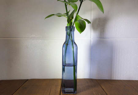 side lighting: Clear blue vase on wooden table top with two small flower branches in it, side lighting casting shadow on the white wall in the background Stock Photo