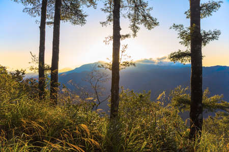 forground: Sunrise on Alishan mountain in Taiwan with trees and vegetation forground