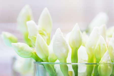 iluminado a contraluz: de cerca de capullos de flores de jazmín blanco en vidrio claro con retroiluminación blanca y suave, se centran en las flores selevtive delanteros