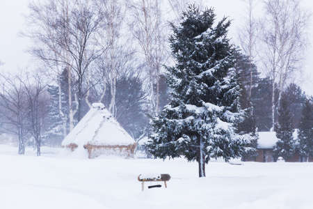 Trees and huts in public park in Hokkaido, Japan covered with thick white snow during winter Stock Photo
