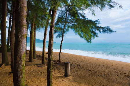 Beautiful sandy beach and trees in Phuket, Thailand with soft morning light, good for Thailand travel theme Stock Photo