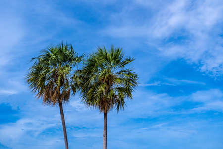 Top of palm trees against blue sky with dramatic clouds formation, copy space