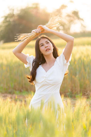 Young beautiful woman holding cut dried barley over her head while standing in the barley field during warm golden sunset behind her, beauty or free spirit lifestyle concept