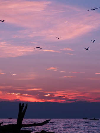 pink sunset over Lake Michigan with silouhette of birds and driftwood Standard-Bild