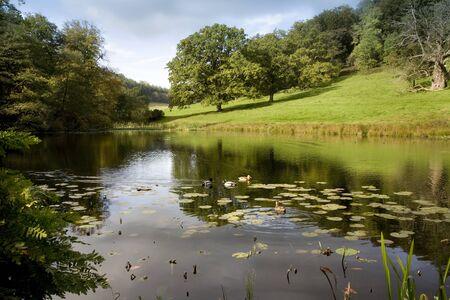 Patos en el lago en los jardines de Stourhead en Wiltshire