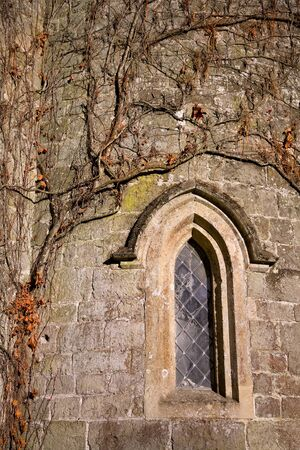 Church wall covered in an ivy creeper in autumn