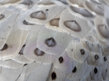 close up of a birds feathers