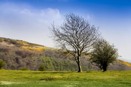 �rboles en Wavering Abajo, parte de las colinas de Mendip de Somerset Foto de archivo