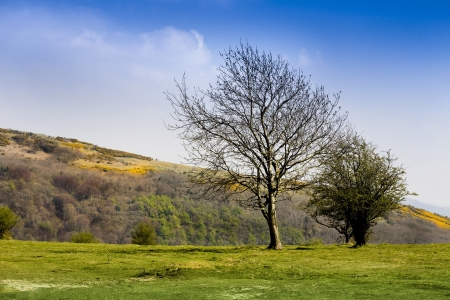 Trees on Wavering Down, part of the Mendip hills in Somerset Stock Photo - 16220218