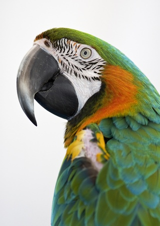 close up of a parrots head