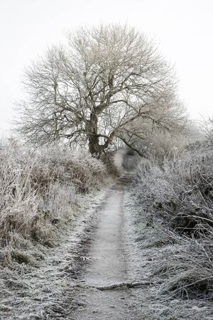 frost covered track on the Mendip hills