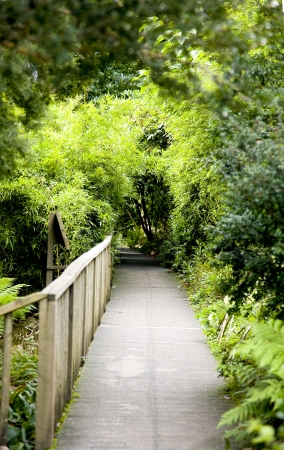 A boardwalk trail through a wooded area of trees Stock Photo