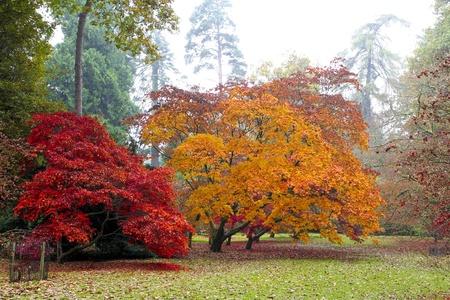 Westonbirt Arboretum en oto�o, mostrando los hermosos colores vibrantes de sus �rboles de arce Foto de archivo
