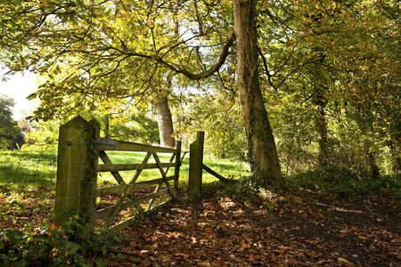 Autumnal woodland scene with a wooden five barred gate and a carpet of fallen leaves on the ground Stock Photo