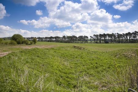 Sunny campo �rbol forrado en Somerset Reino Unido