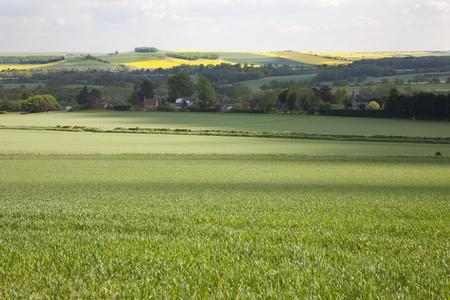 wiltshire: Wiltshire landscape