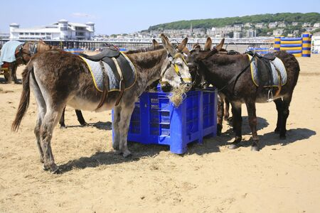Donkeys on the beach photo