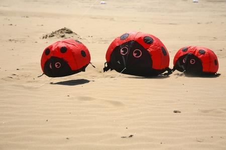 steep holm: ladybird kites