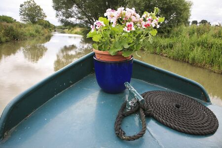 black moor: A pretty plant in a pot on  a narrowboat on the grand union canal