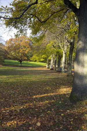 Somerset park in the fall