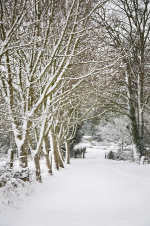 Snow covered avenue of trees  Stock Photo