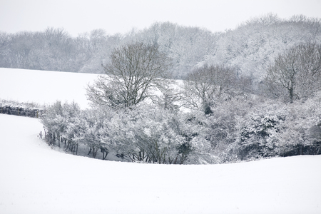 covered fields: Snow covered fields