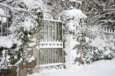 A gate and ivy covered in snow photo