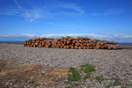 A log woodpile stacked up on a beach ready for the winter