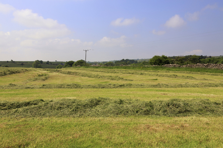 A field of cut grass drying in preparation for baling for hay in the county of Somerset in the UK