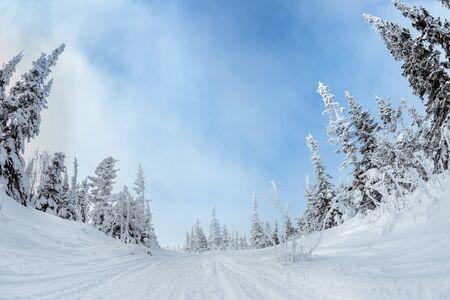 Snowmobile road between beautiful snowy fir trees at winter season