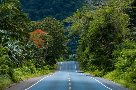 Straight empty tropical jungle road without peoples and cars