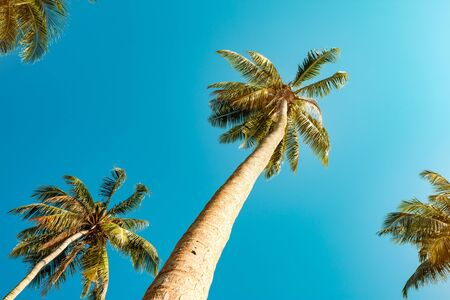 Beautiful palm tree plant against blue sky