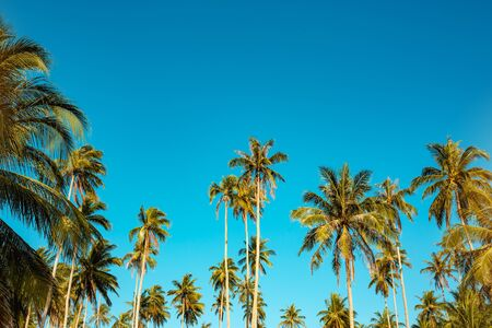 Tropical landscape with palm trees and blue sky