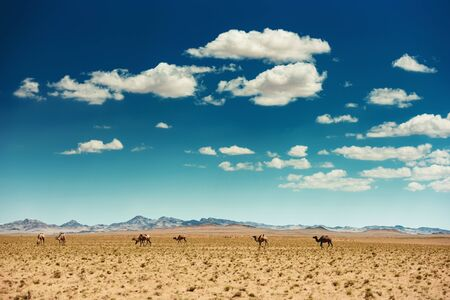 Beautiful mongolian gobi desert or steppe landscape with camels and cloudy sky Imagens