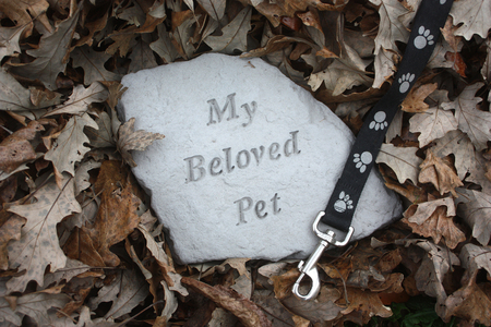Loss of a Pet Memorial in Fall Leaves Stock Photo