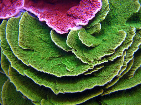 reef fish: Colorful Corals