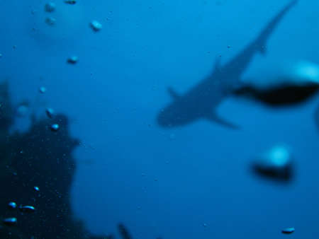 Silhouette of a Shark photo