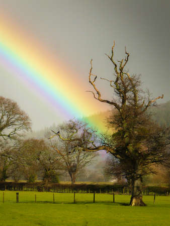 Rainbow coming out of gray sky appearing to end at featured tree Stock Photo