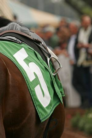 blanket horse: Close-Up of Blanket and Stirrup on Thoroughbred Racing Horse Stock Photo