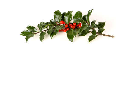 Perfect sprig of holly with bright red berries on white with room for your holiday text. photo