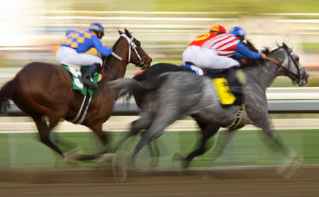 irrefutable: ARCADIA, CA - JAN 1: Jockey Mike Smith surges past his rivals to give Irrefutable (grey roan) the win in the 7th race at Santa Anita Park on Jan 1, 2011 in Arcadia, CA.